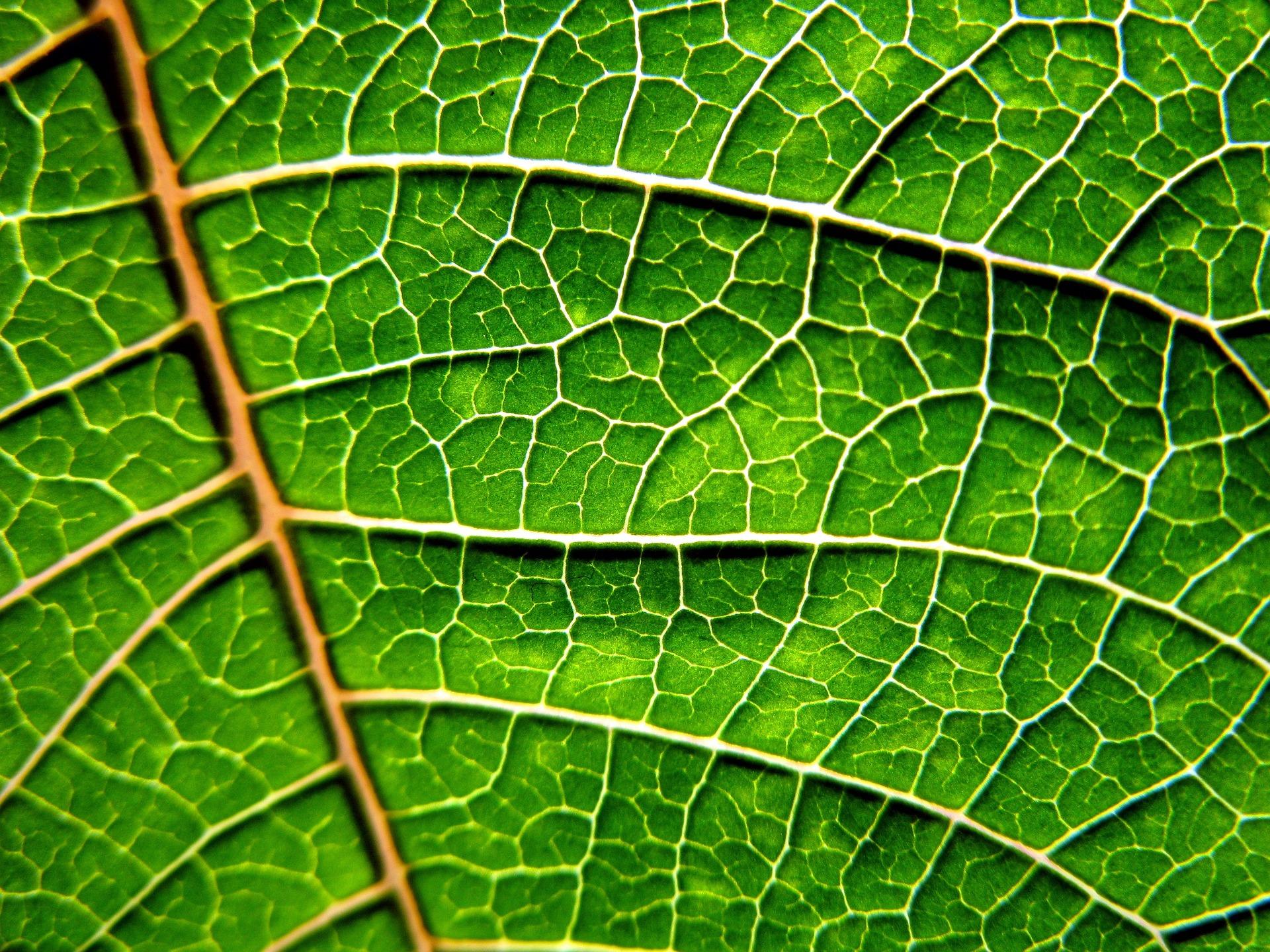 gree_leaf_plant-up
